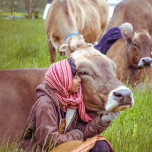Waterbeds, Country Music and Backscratchers: How Cows Get Coddled